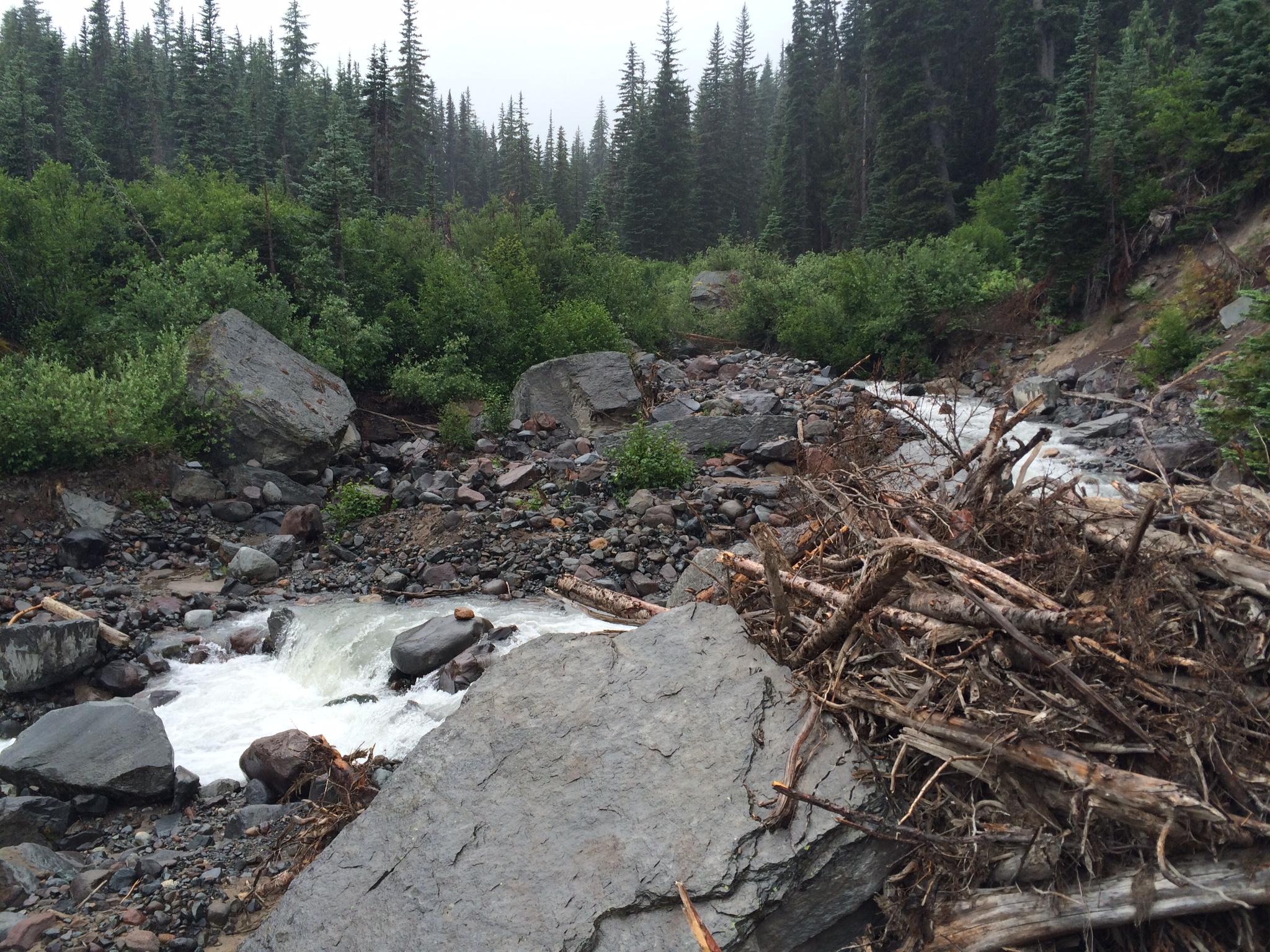Glacier Basin trail toward White River