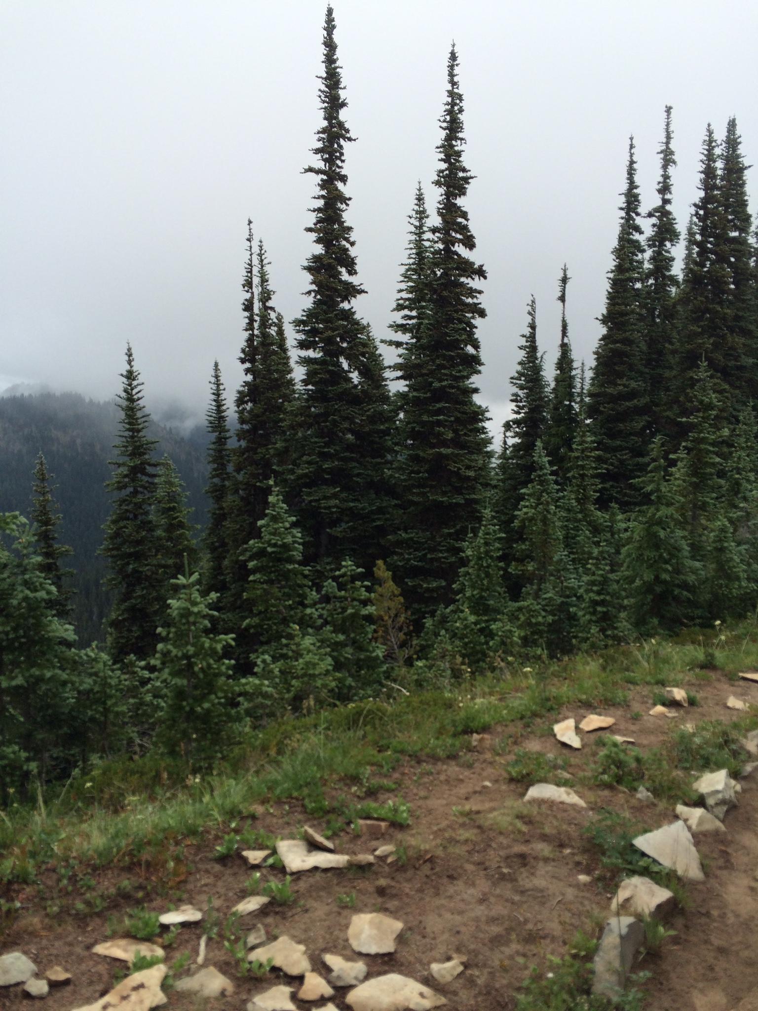 Sunrise Point trail
