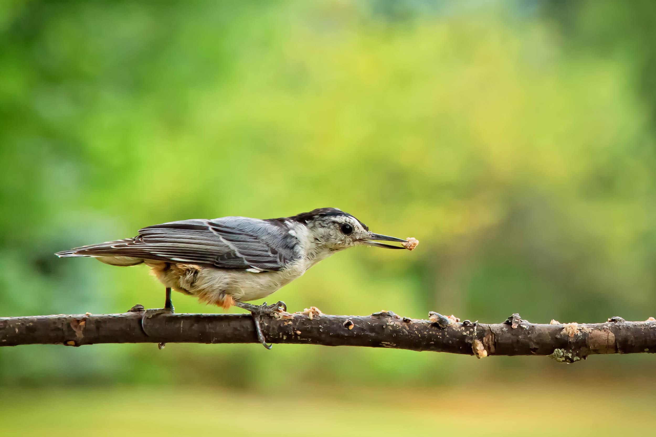 birds-2.jpg