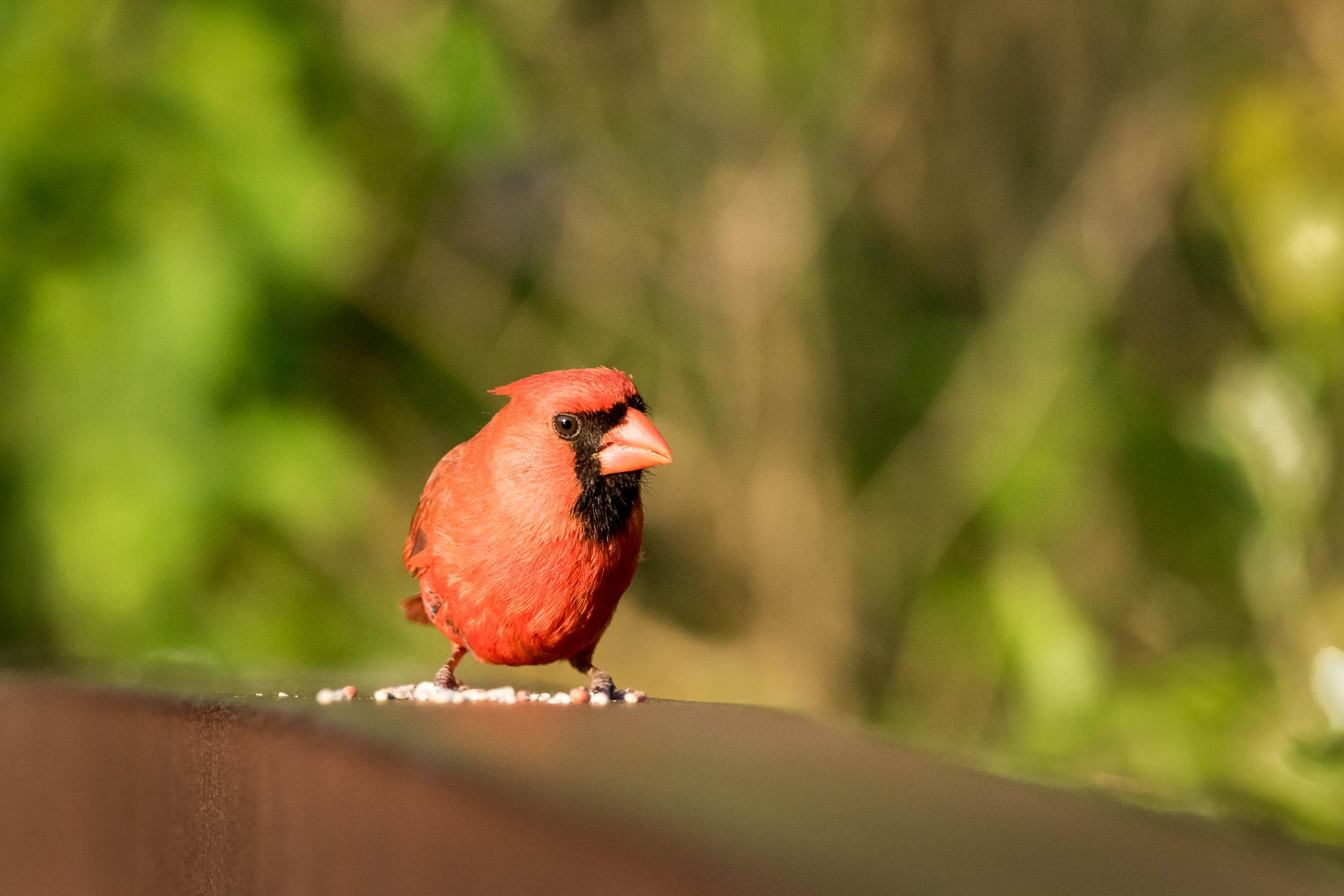 birds-6.jpg
