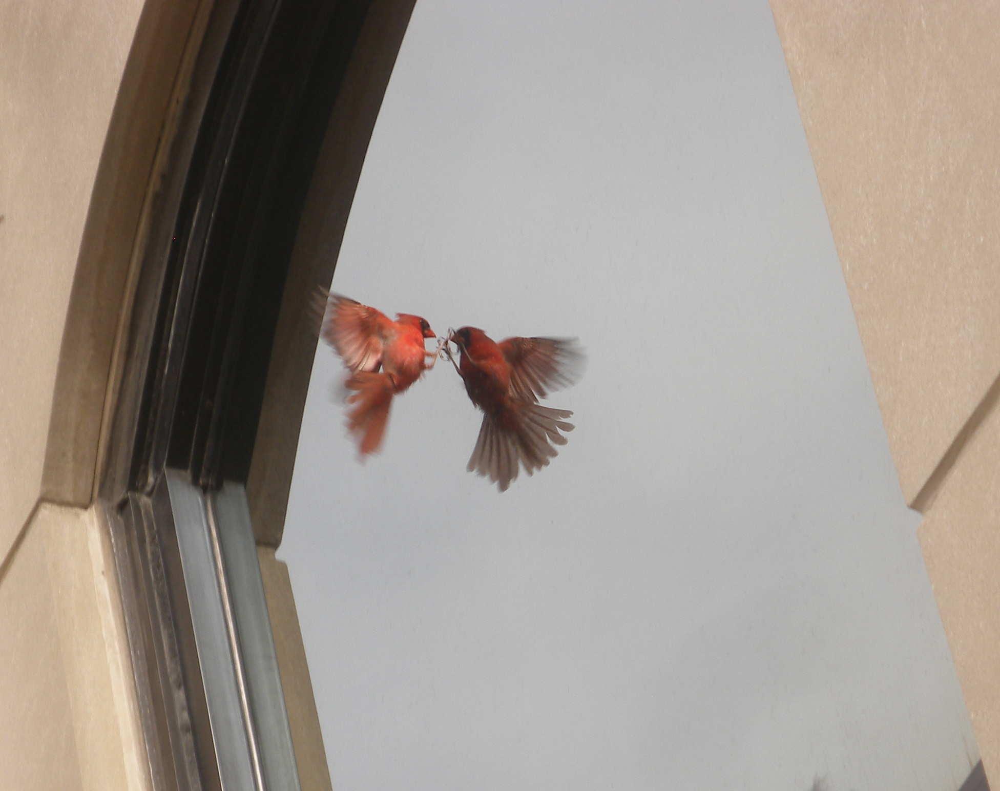 Photo courtesy CBCM (http://www.birdmonitors.net/)