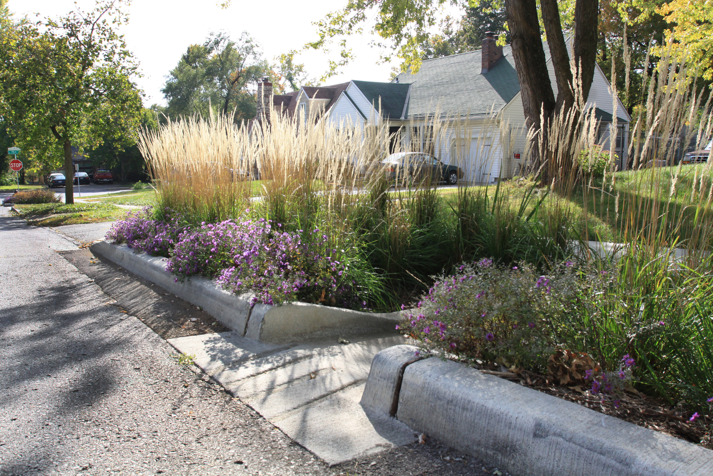 On drier days, the neighborhood's rain gardens are just that - gardens.