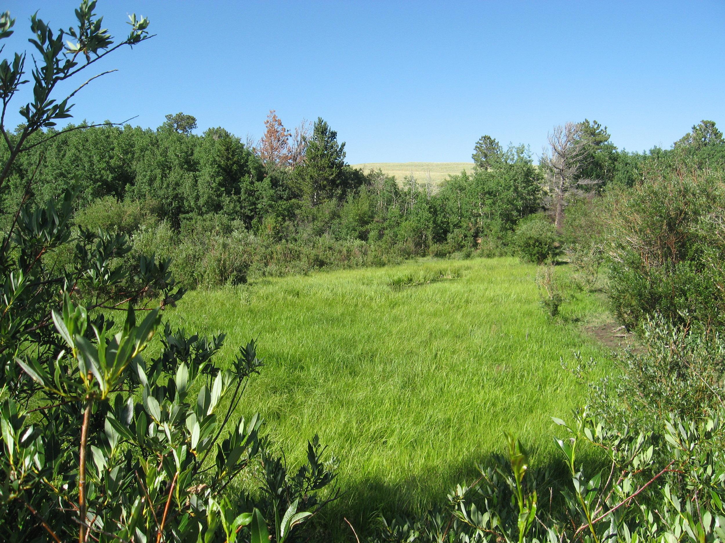 Wyoming Wet Meadow