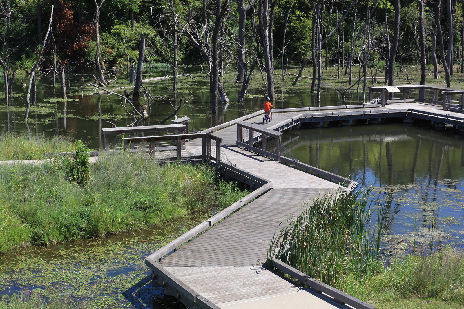 Lake Lenexa 5.jpg