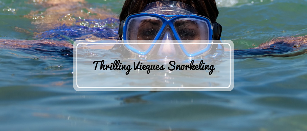fin-time-adventures-vieques-banner-img-02.jpg