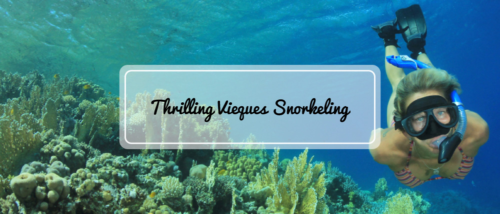 fin-time-adventures-vieques-banner-img-01.jpg