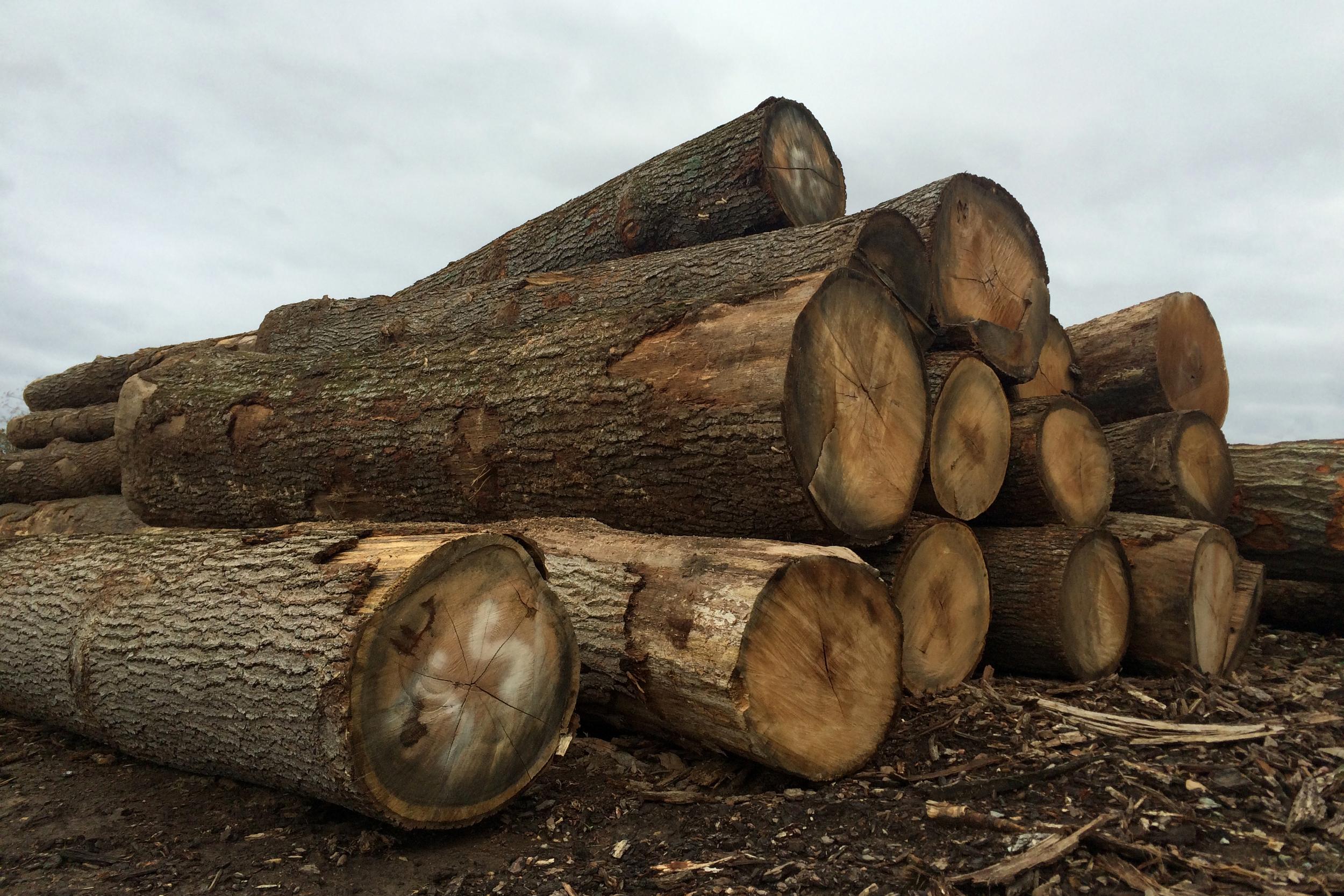 Logs 1.jpg