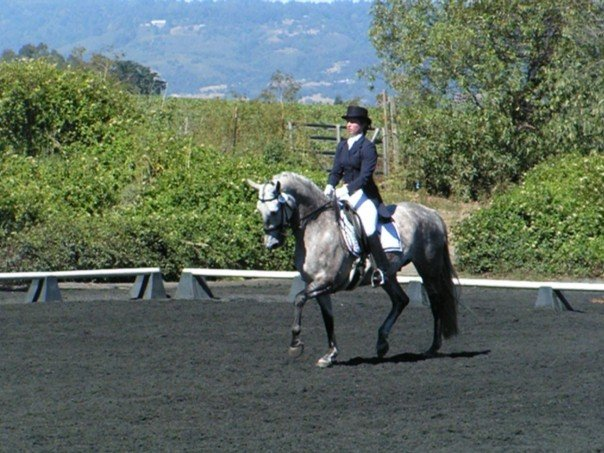 Showing I-1 at American Sporthorse in CA