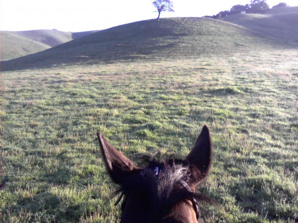 On the search for cows to chase...a multi-talented FEI horse!