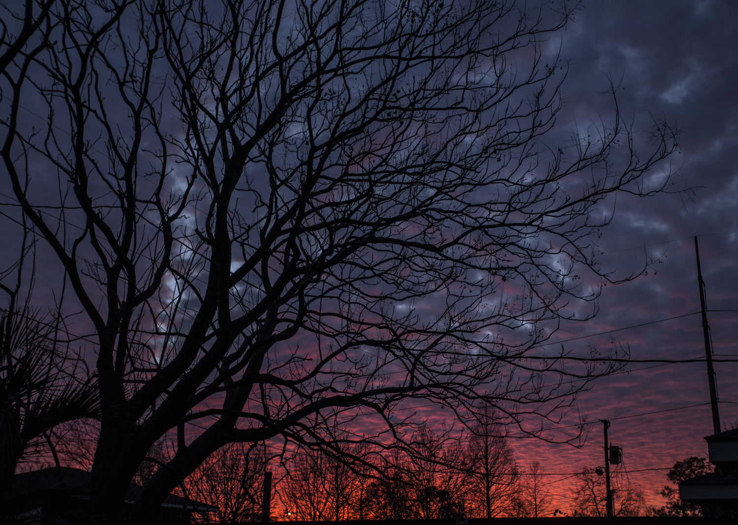 Zack-Smith-Photography-New-Orleans-How-to-tuesday-#27-Long-Exposure-Best-Night-Photography-Tree-No-Leaves-Sky-Clouds-Beautiful-Purple-Blue-Orange-Pink-Sunset-Dark-Chill