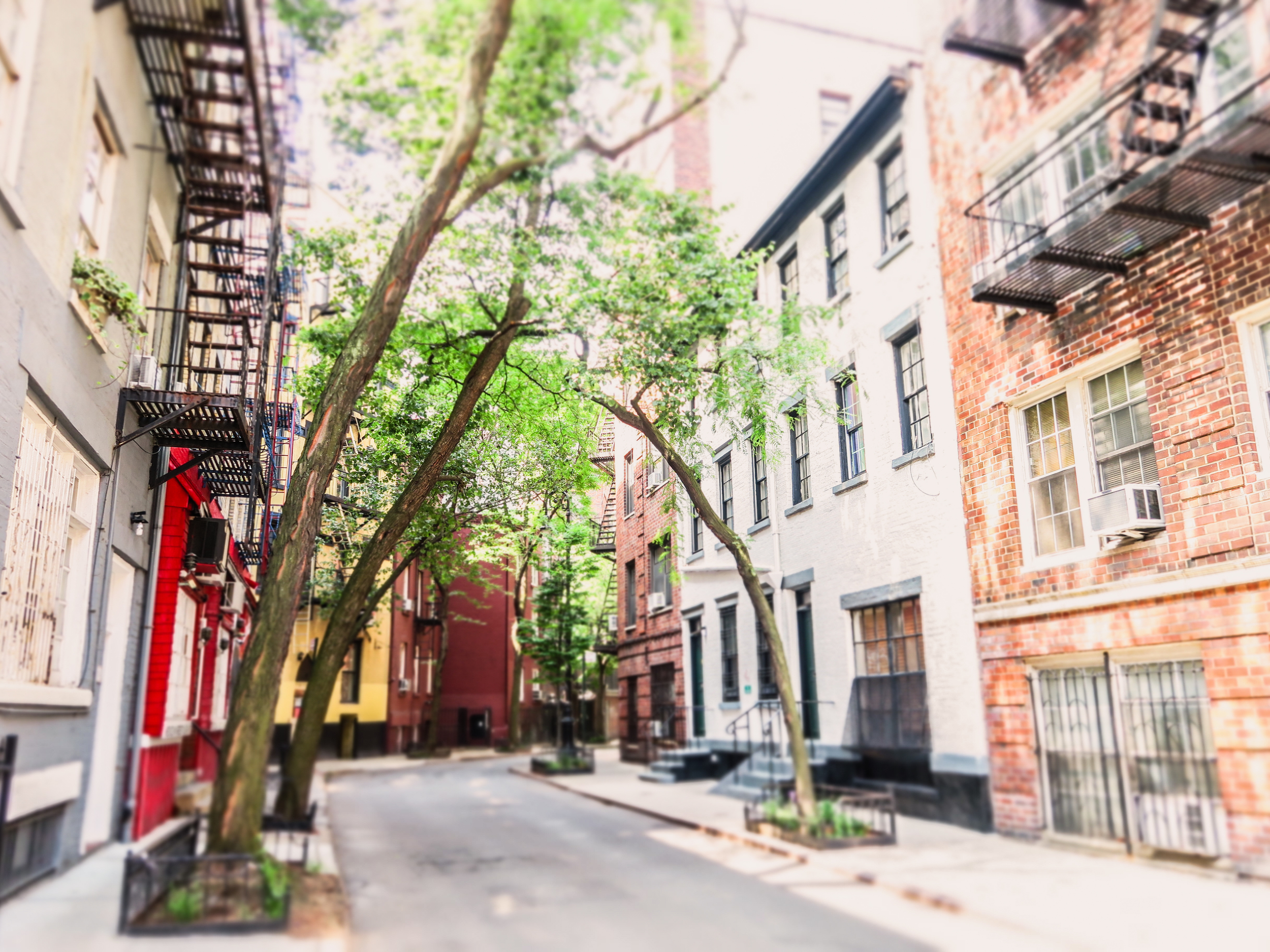 Zack Smith Photography New York City Street Apartments Fire Escapes Trees Urban Scenery Landscape