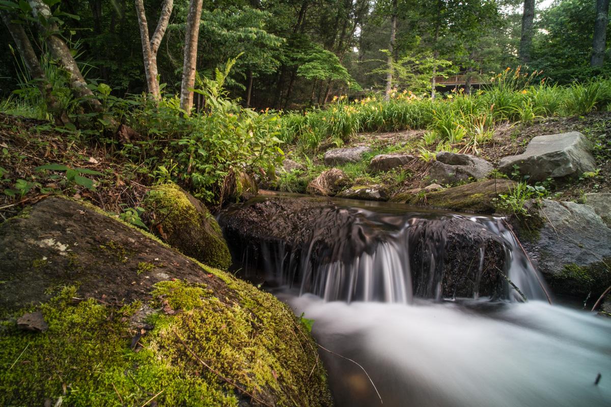 Zack Smith Photography North Carolina Brevard School of Music Center Nature Grass small water drop off rocks trees