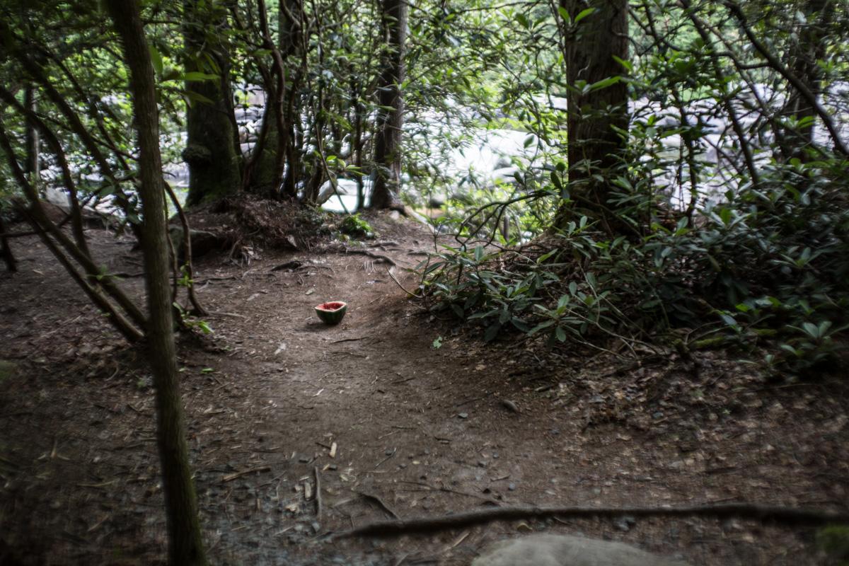 Zack Smith Photography North Carolina Brevard School of Music Center Nature trail trees woods