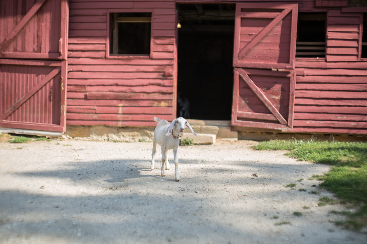 Zack Smith Photography North Carolina Brevard School of Music Center Goat Barn Animals