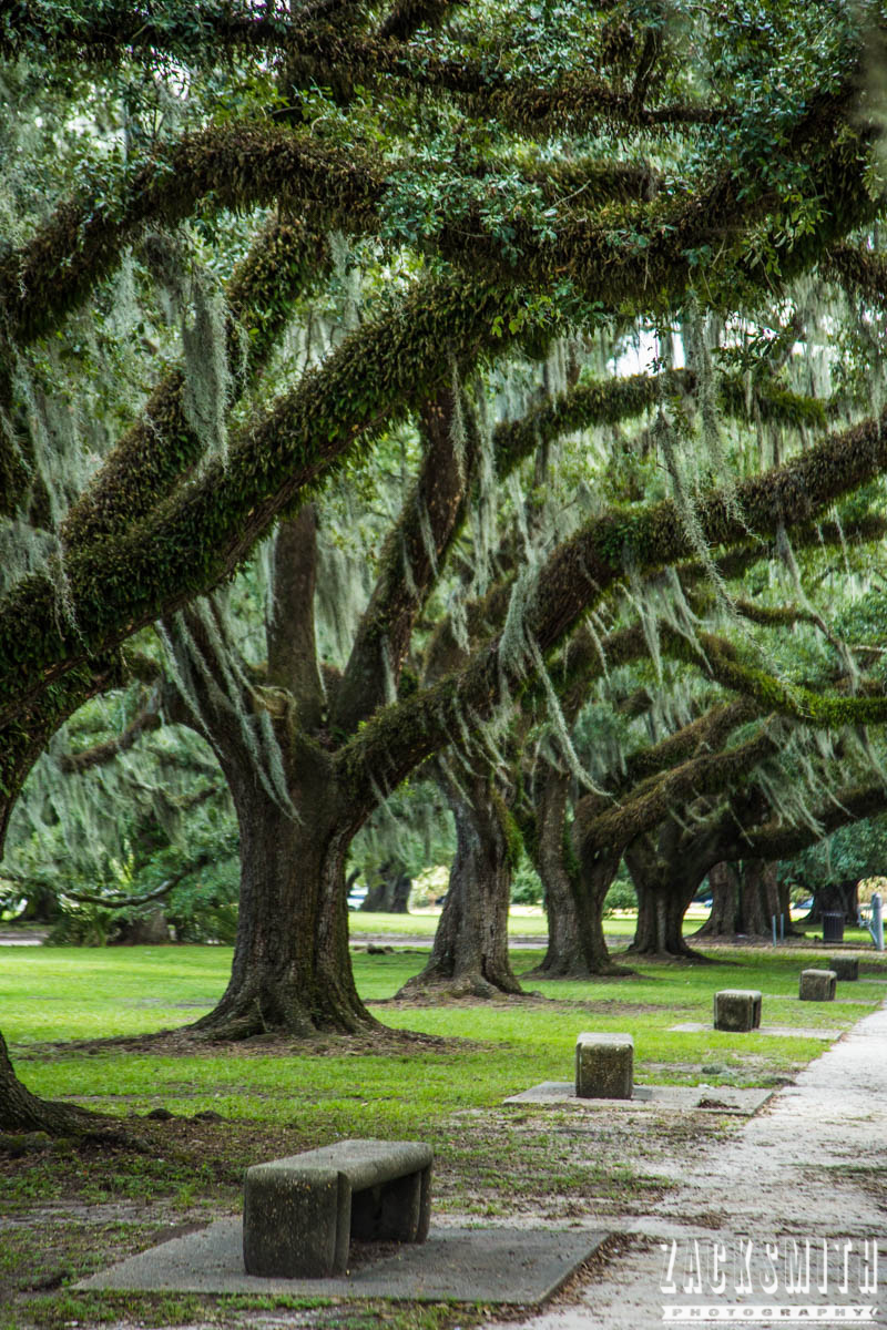 city-park-new-orleans-louisiana-zack-smith-photography-location-scout-oak-trees