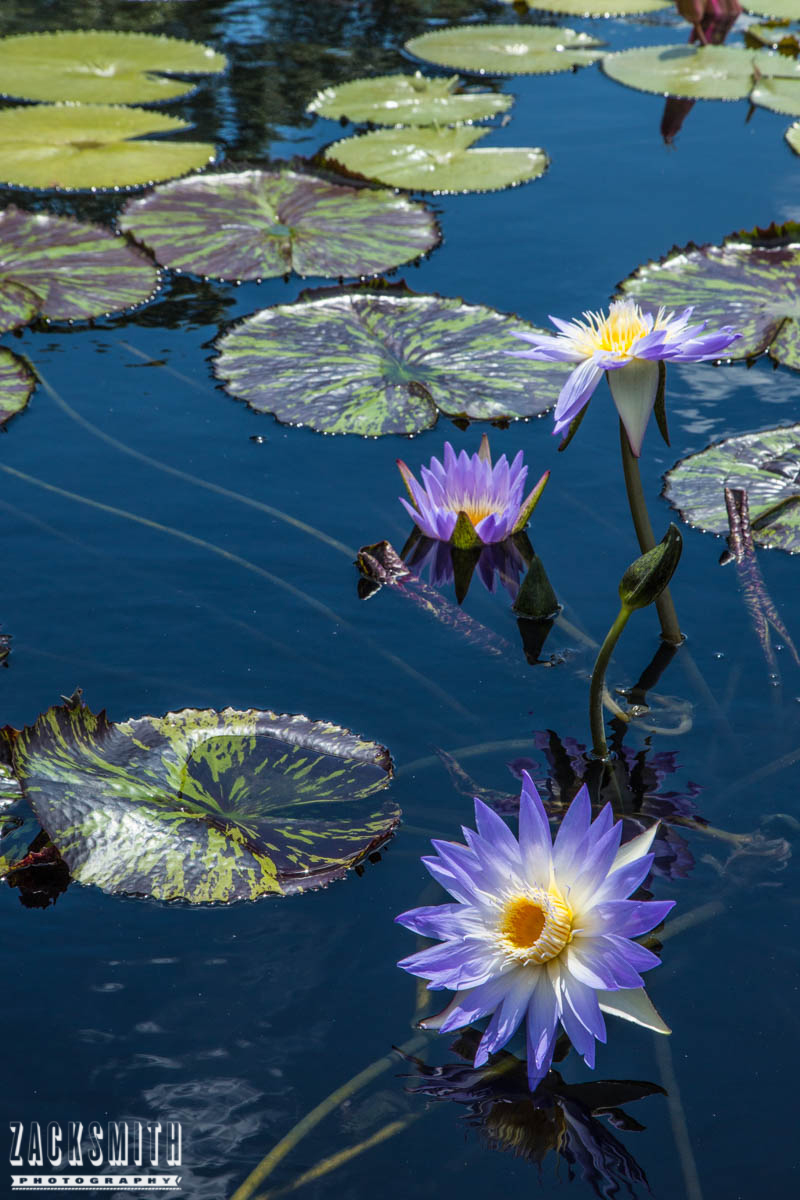 city-park-new-orleans-louisiana-zack-smith-photography-location-scout-lily-pads-botanic-garden