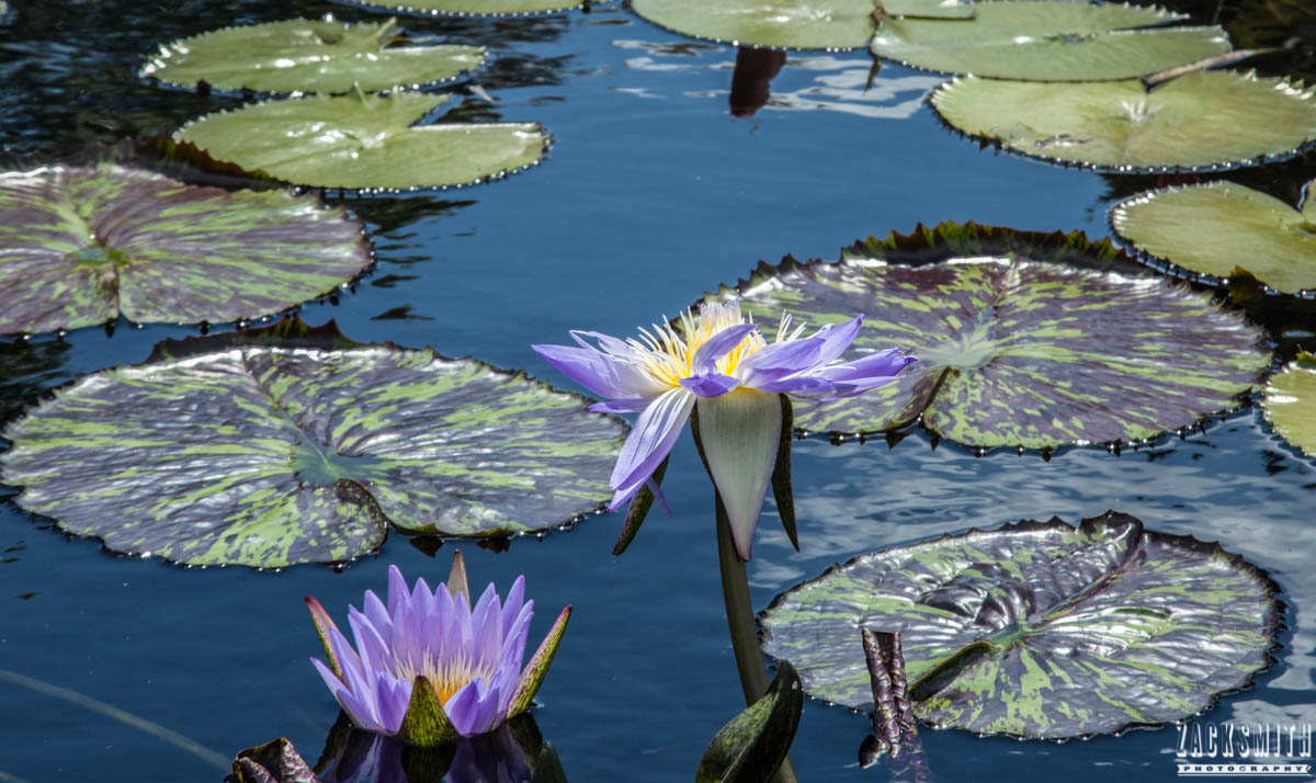city-park-new-orleans-louisiana-zack-smith-photography-location-scout-botanic-garden-lily-pads
