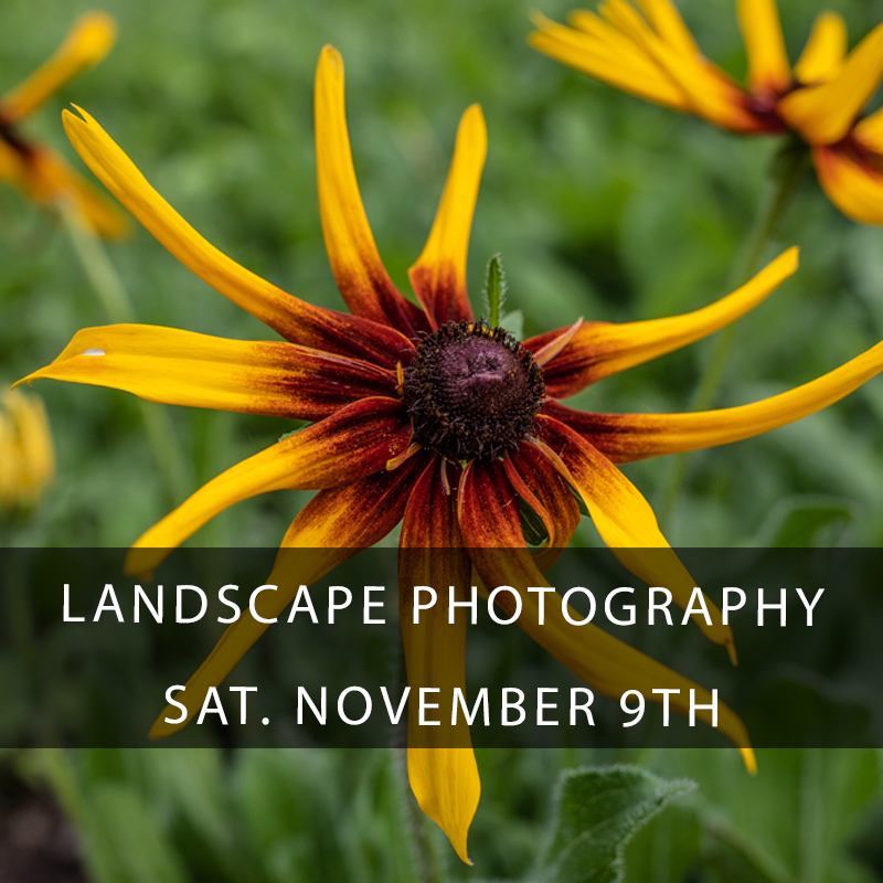 Landscape Photography Workshop - Join photographer Zack Smith as we learn to better your understanding and execution of landscape photography in the lush surroundings of the Piety Gardens at Crescent Park, City Park, and Bayou Bienvenue. This all day informative and hands-on photography workshop is not to be missed! The natural landscape of Louisiana is best reflected in it's parks, swamps, and open landscapes. This course is for all levels of photographers!