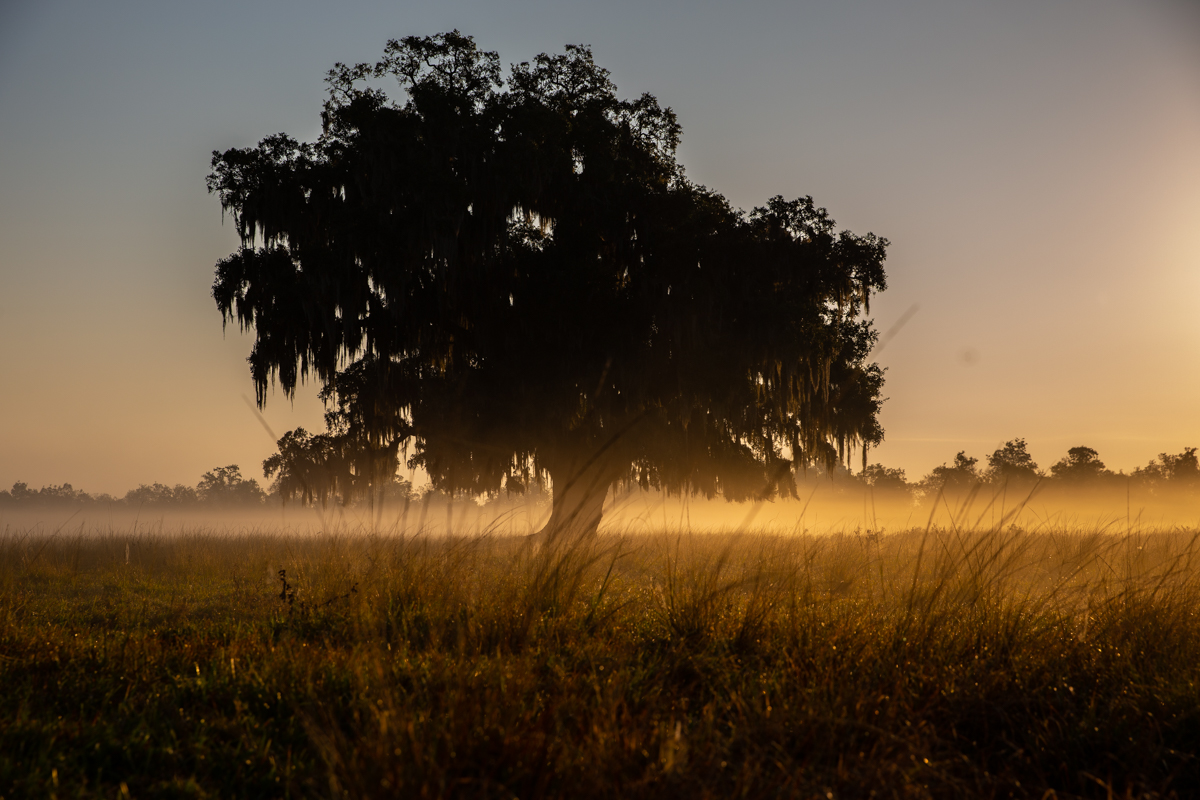 how-to-shoot-low-light-trees-sunrise-zack-smith