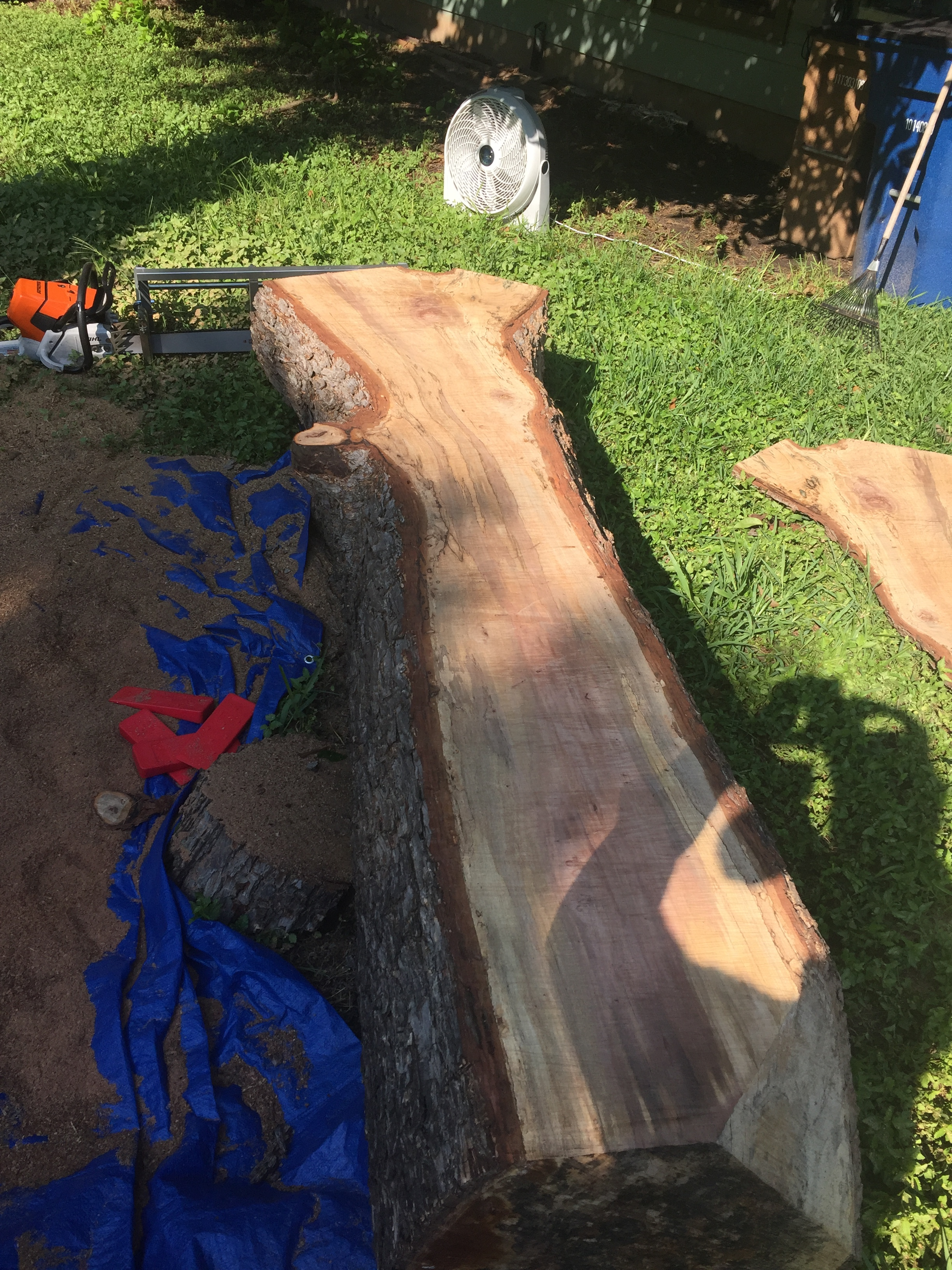 Pecan log after initial cut