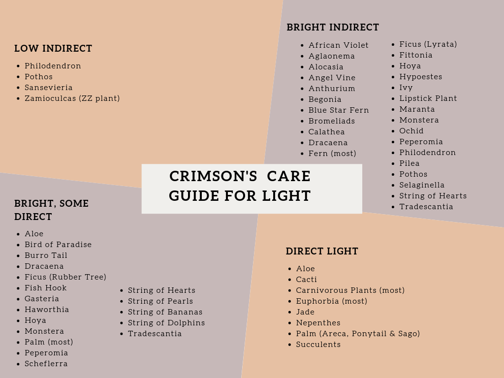 Crimson Care - Light.png