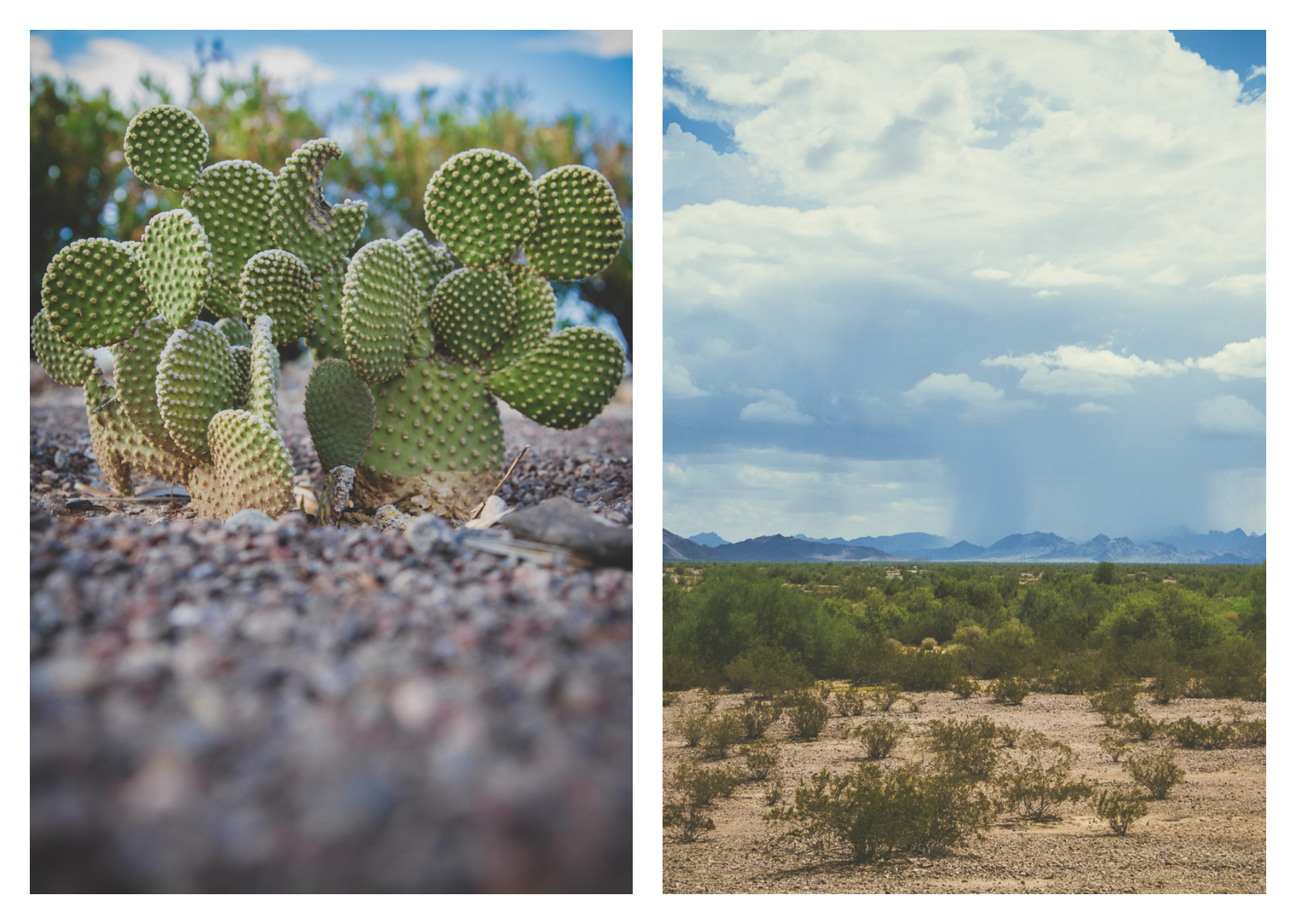 Left: Shot at f/2.8 for a shallow depth of field to get just the cactus in focus / Right: Shot at f/16 to get the whole landscape in focus