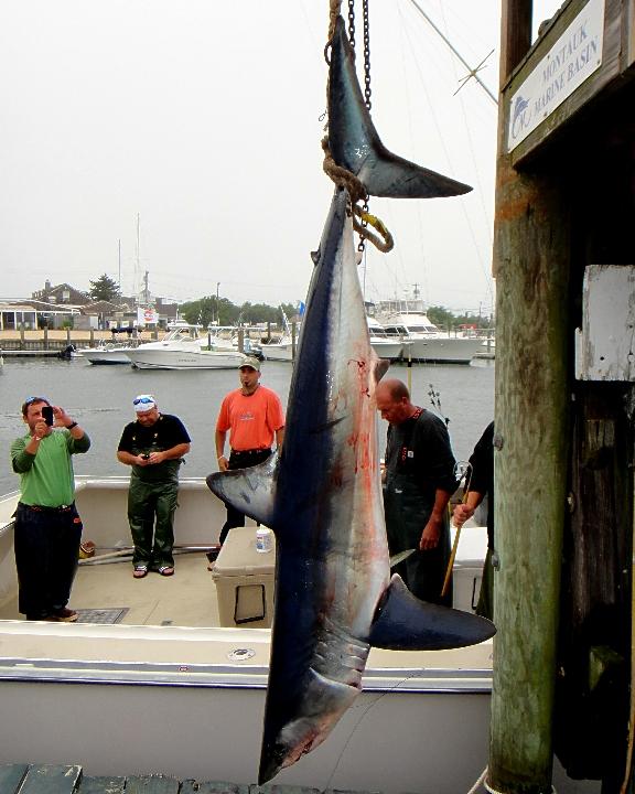 MMB Shark Tournament 2013 4.jpg
