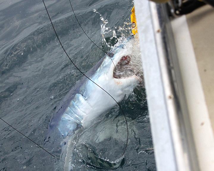 Day 1 Shark Tournament 10.jpg