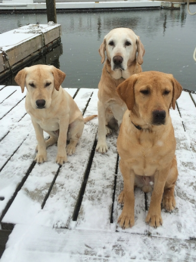 Left to right Mako, Deke, and Diesel
