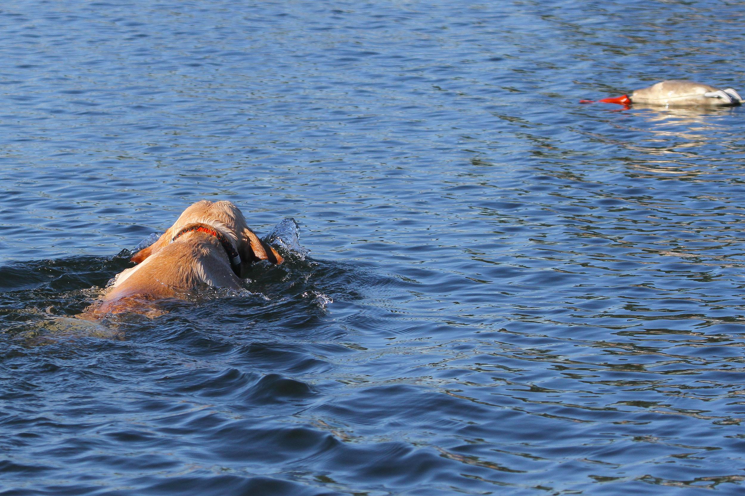 Mako boat training 2.jpg