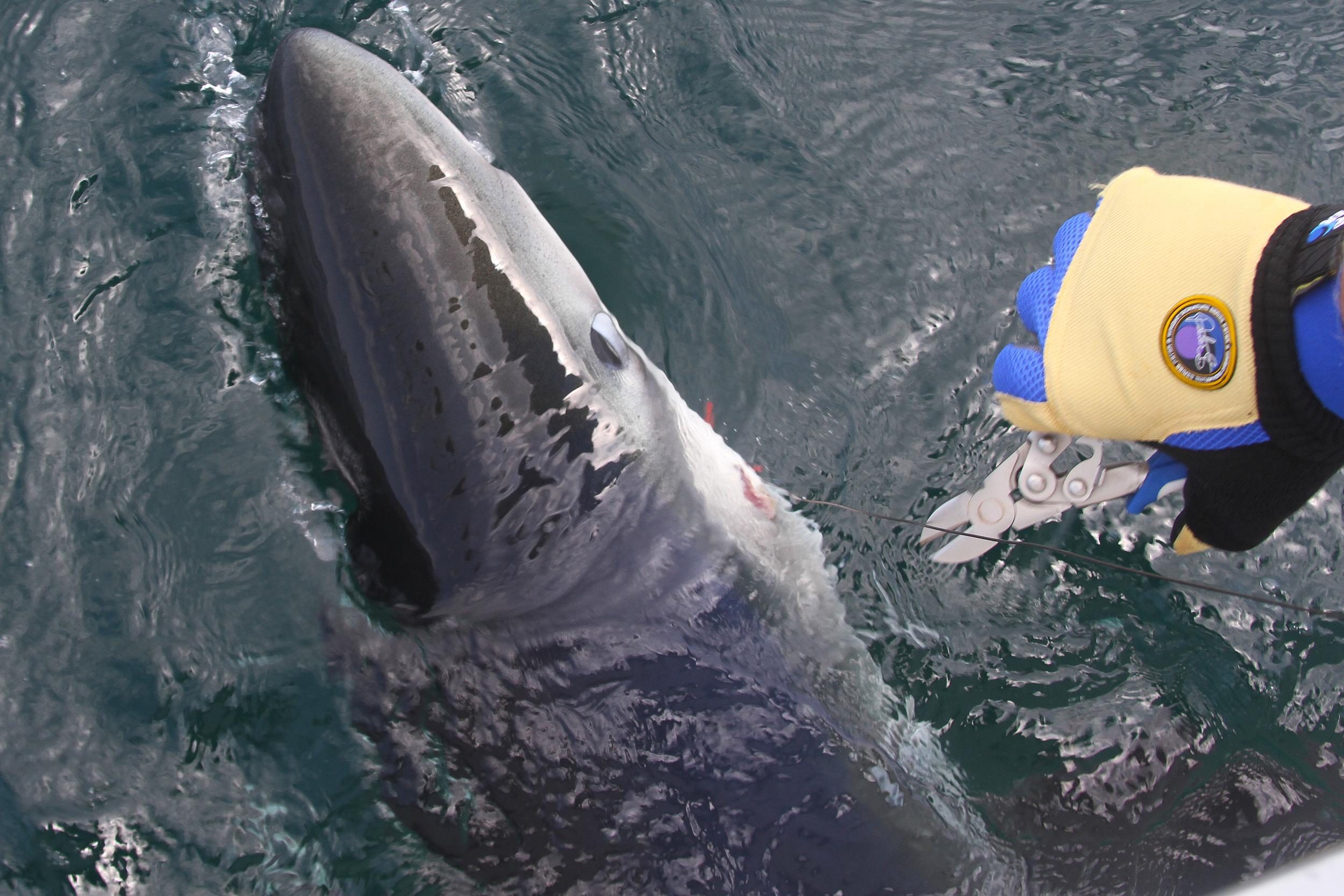 Sharking10.jpg