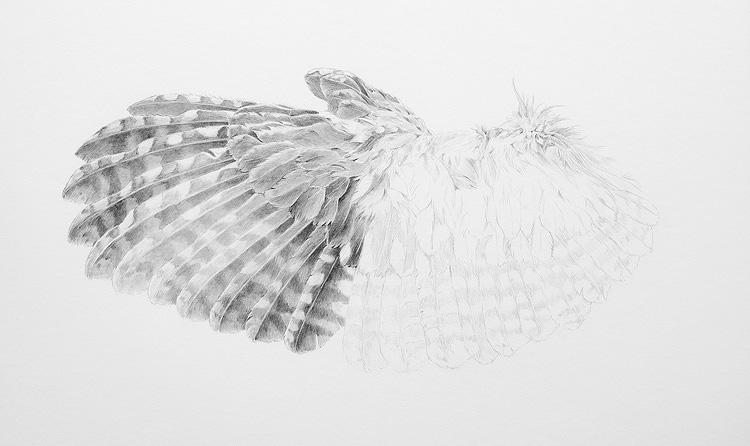 Screech Owl Wing In - Progress
