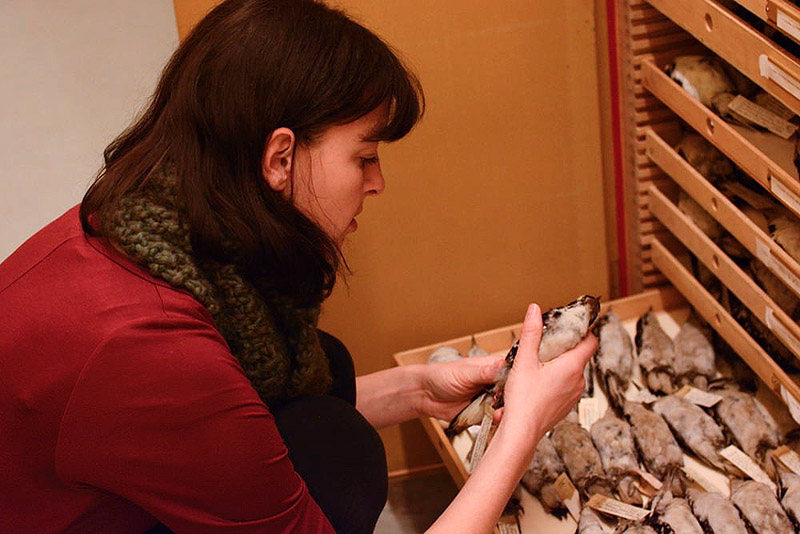 Emily selecting a good specimen to draw.