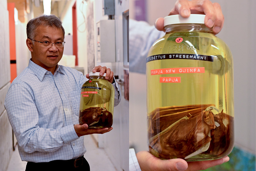 Dr. Burton Lim holding bat specimens preserved in alcohol