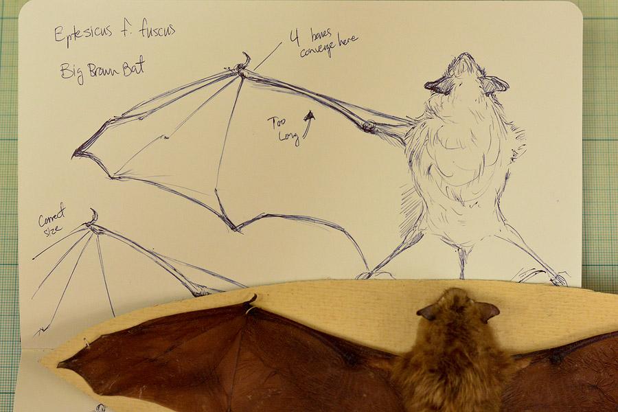 First bat sketches, ballpoint pen.