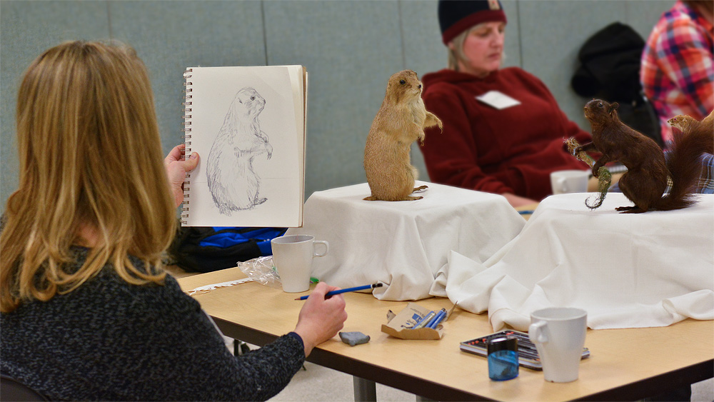 On the first night, each participant was given their own mammal specimen to draw directly from