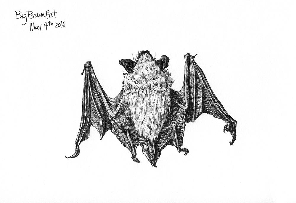 Pen & Ink Sketch