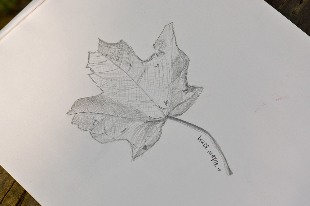 S_22.jpg