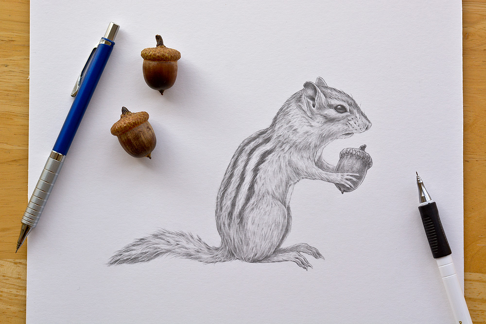 Finished Chipmunk artwork, drawn actual size