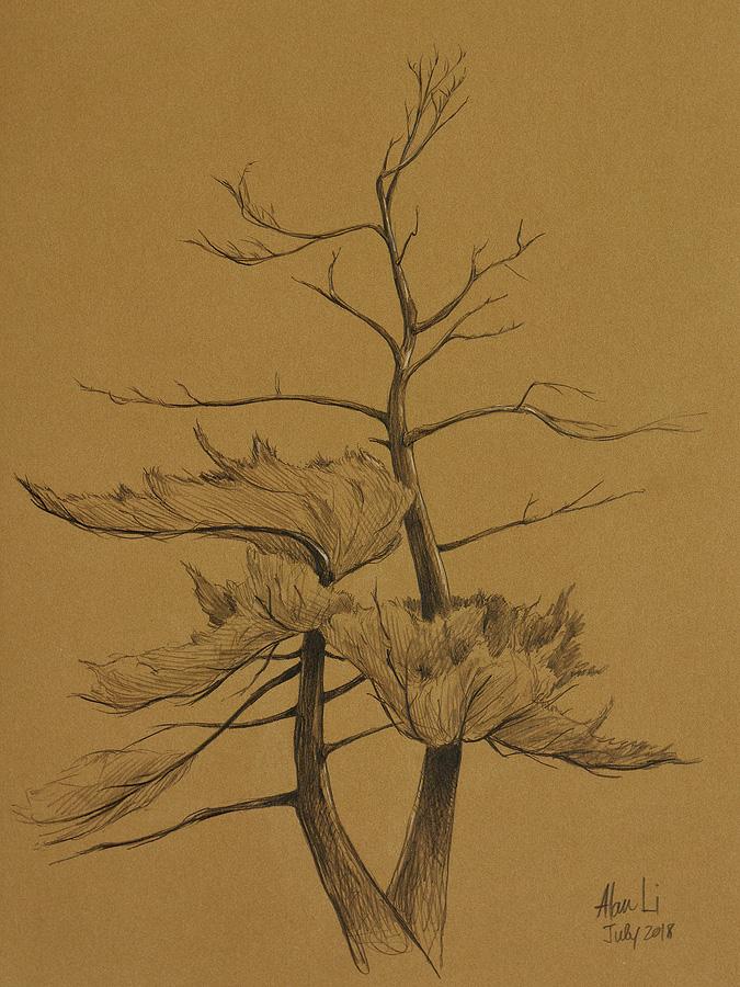 White Pine, pencil on Kraft paper