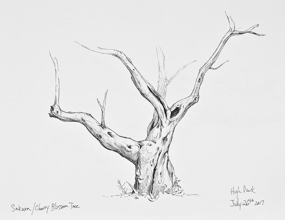5 Tree Sketching Tips Alan Li