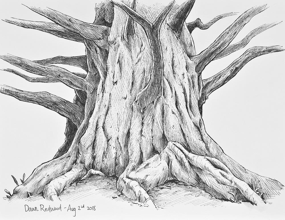 Sketched on the spot at Toronto Botanical Garden