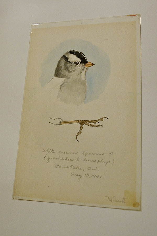 Terry spent extensive time in the field & would create bird studies like this on location