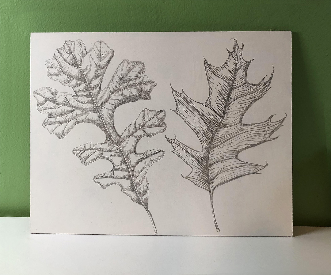 Silverpoint drawing by Gail Finlayson.