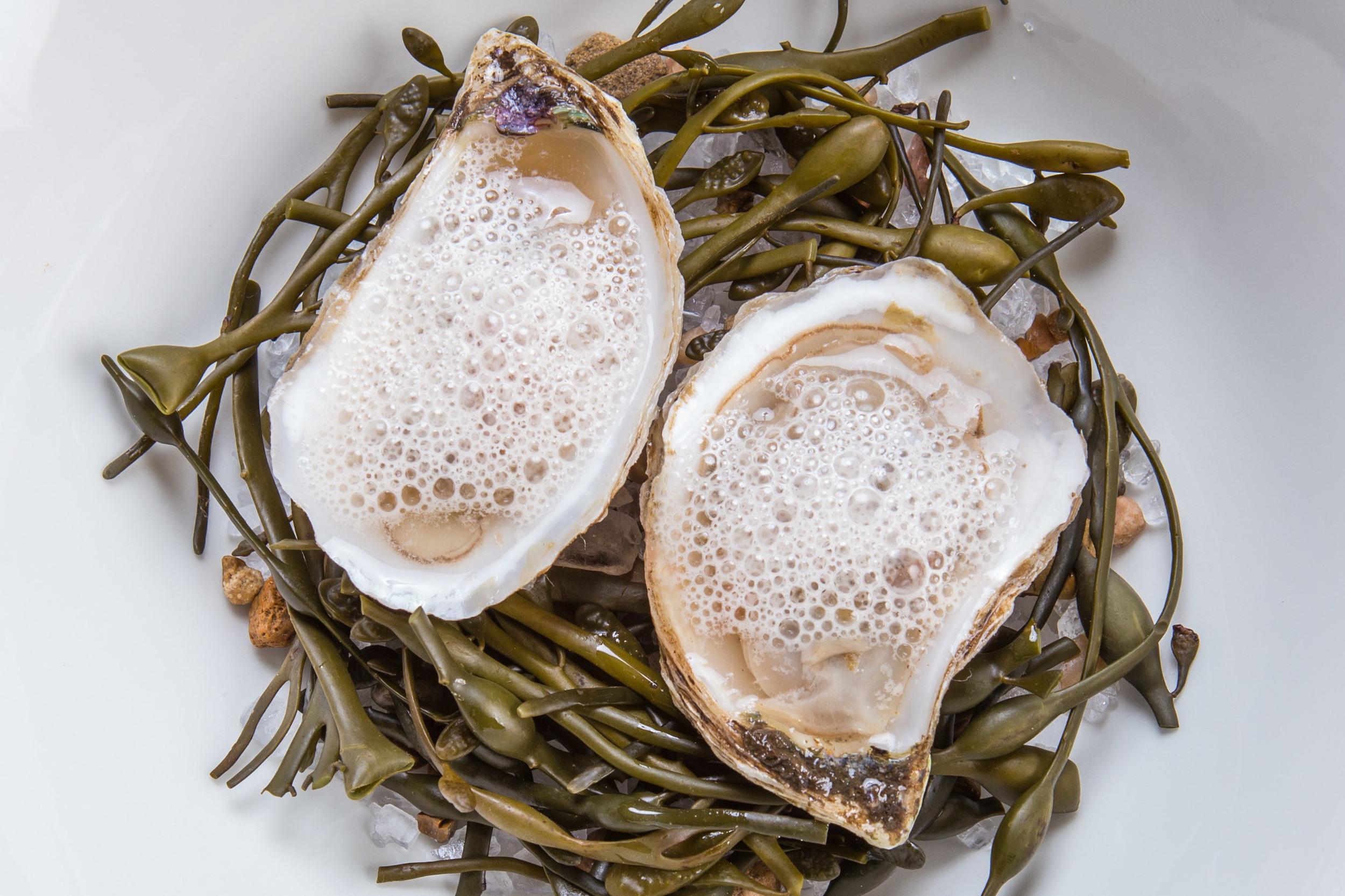 Market Oyster / Grapefruit Mignonette