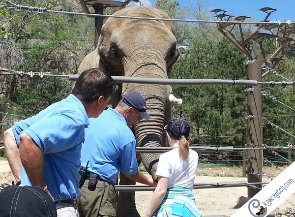 The Cheyenne Mountain Zoo includes amazing animal encounters and great views- in Colorado Springs. I want to go here!