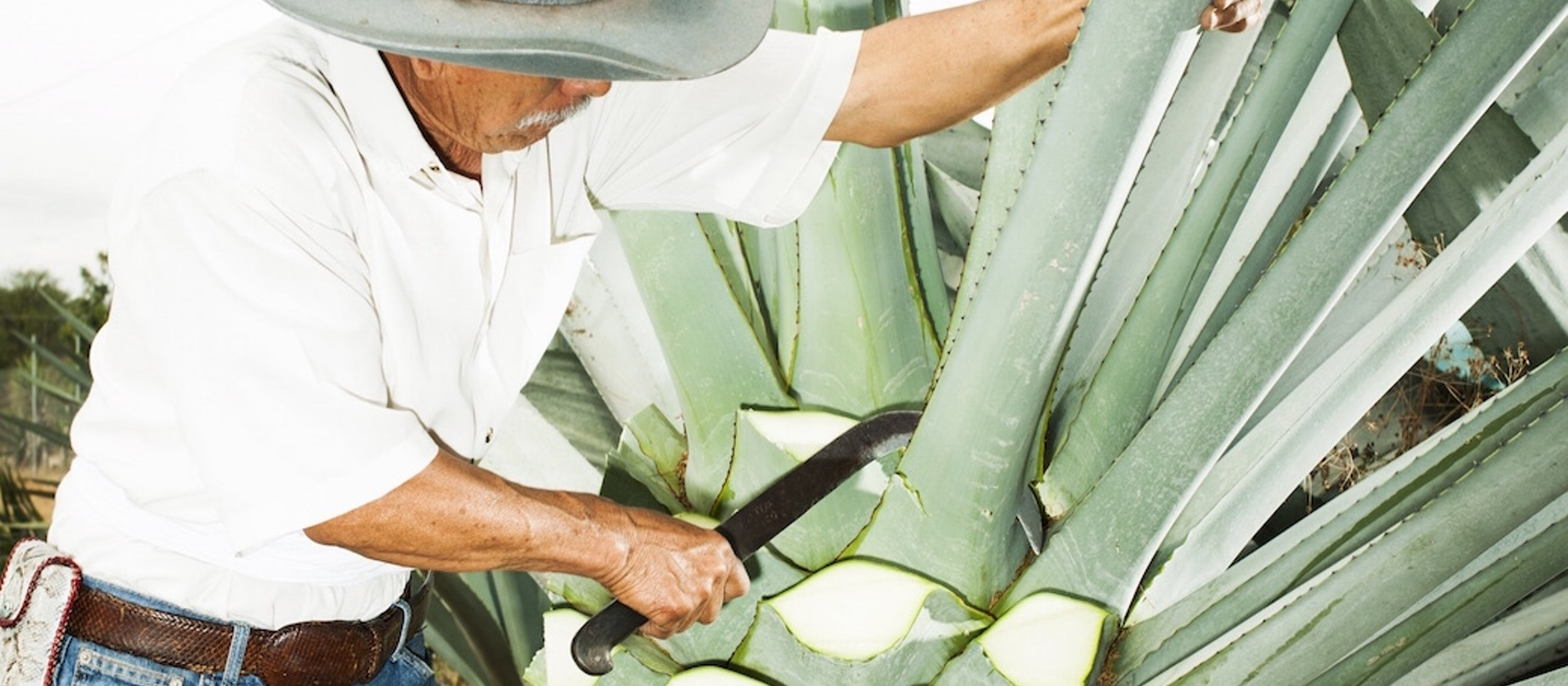 Afar   How fancy Mezcal is changing everything in the villages of Oaxaca