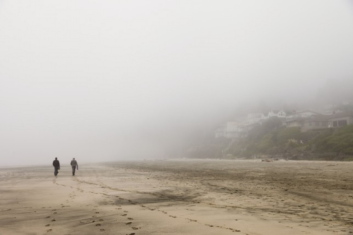 Afar   Coastal foraging in the Oregon fog.