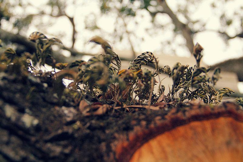 leaves_full.jpg