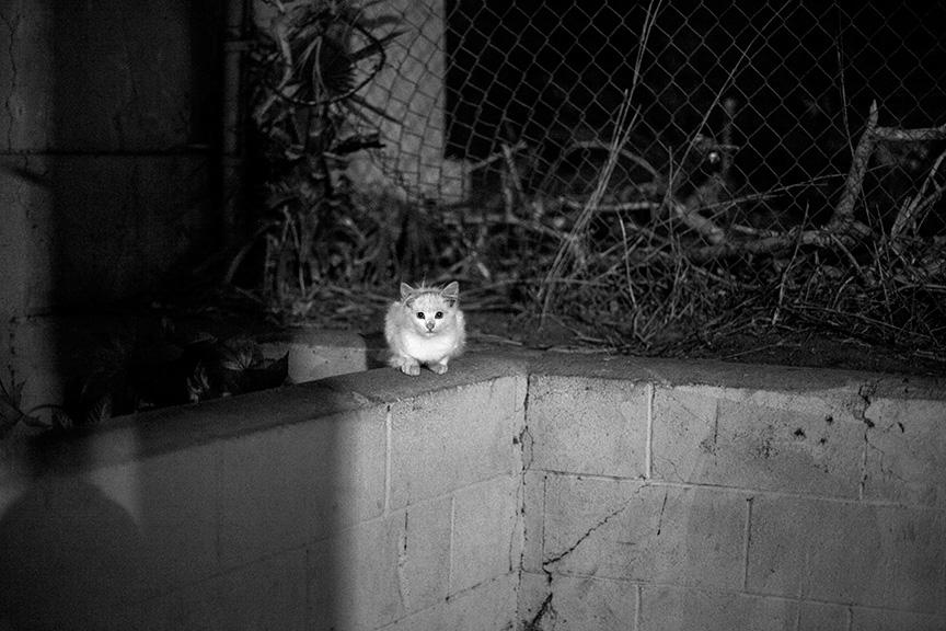 Cat_Gang (23 of 20)_r copy.jpg